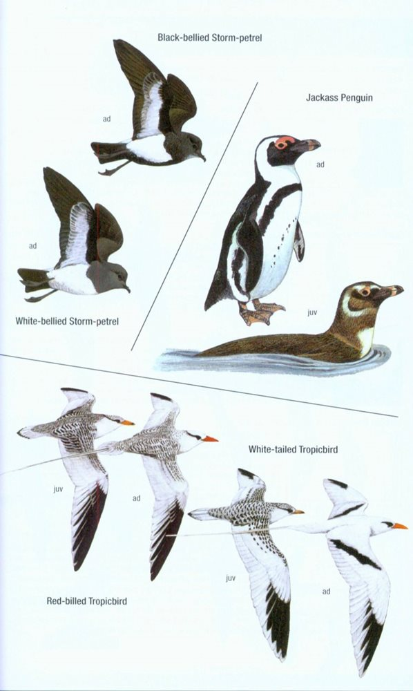 field guide to western birds