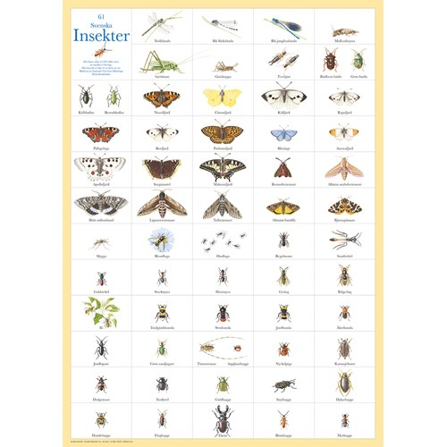 Poster 61 Swedish Insects